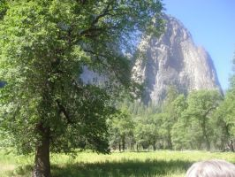 Yosemittee 4 by WillowTreeWitch