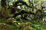 The ancient wood by LordLJCornellPhotos
