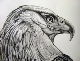 Eagle Pencil Rendering 1 by HouseofChabrier