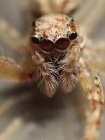 Another Jumper - Cropped by bredli84