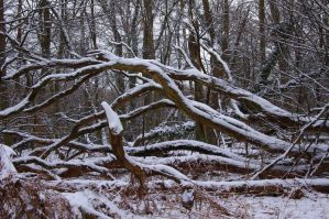 dormant nature by Pippa-pppx