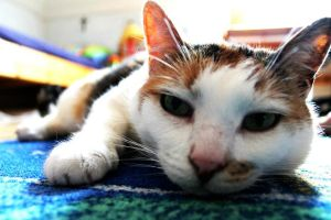 Lazy Cat by LaceQuin