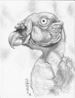 King Vulture Portrait!! by Halasaar01