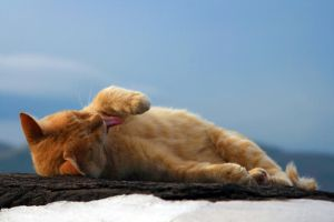 Lazy cat by Taihe