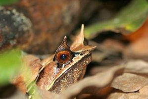 Frog by melvynyeo