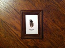 Guinea Fowl Feather Study by TheButterflyBabe