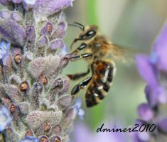 Bee Macro by DanielleMiner