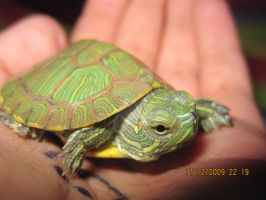 Turtle. by mjpyt