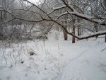 Winter forest 637 by MASYON