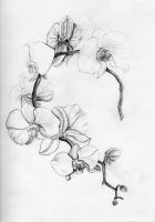 Orchidee by migas90