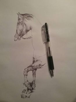 drawing of a horse by maxxxxfischer