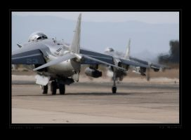 Harriers by jdmimages