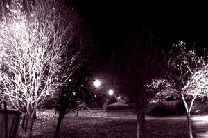 Black and White Trees by Moones95