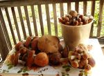 First Shrooms Harvest of 2014 by Sicilium