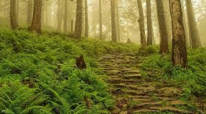 Stone trail in the fog by miirex