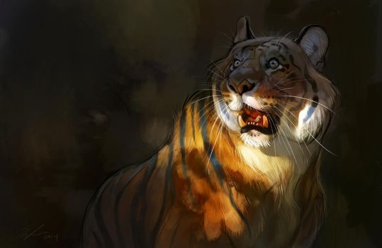 Tiger sketch by ailah
