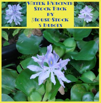 Water Hyacinth Stock Pack by Mouse-Stock