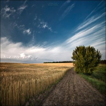Wheat field by manroms