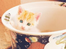 Kitty in pot by violet-funeralflower