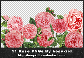 11 Rose PNGs By heeykiid by heeykiid