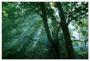Morning in a forest by erzsebet-beast