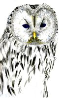 White Owl by chaos34d
