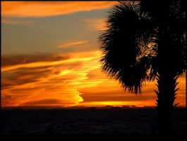 Florida Palm Tree Sunset 2 by effaced