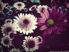 Boquet by PandaWicked