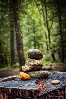 Balance in the forest by BivinsPhotography