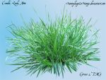 Grass 2 PNG by Sammykaye1sStamps