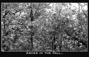 Ashes in the Fall by bw-photography