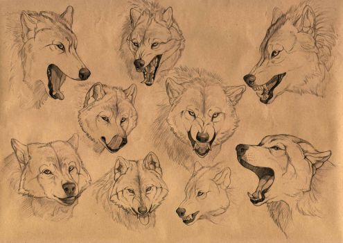 The wolf emotions by Anisis