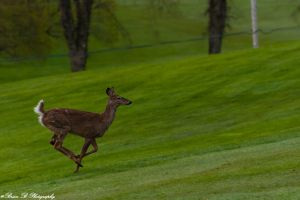 Flee! by Brian-B-Photography