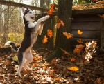 Autumn Leaves by ToryHartley