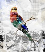 Bird Miced Collage by andreyspain