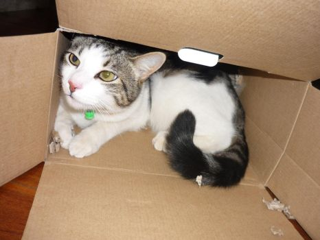 Box Cat uncovered by Catofhope