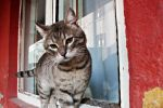 gray stray cat by ANDMAiYESi1986