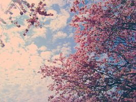 From Under The Cherry Tree by Autopsyh