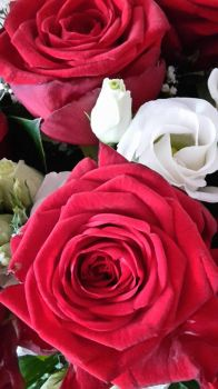 red and white passion by Sharee1
