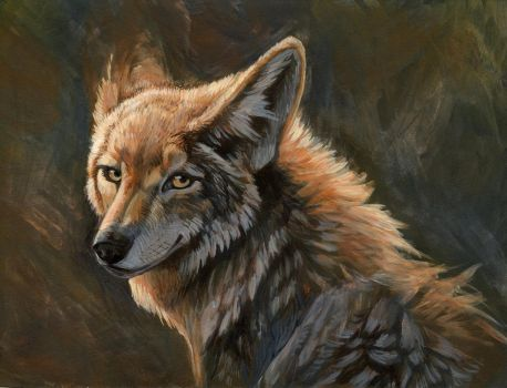 Coyote by hibbary