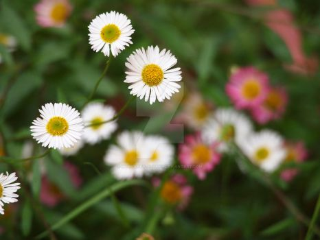 Tiny flowers contain detail by Morgandy-Jovana