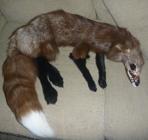 Burgundy Skullfox SOLD by Tricksters-Taxidermy