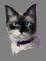 Cat Speed Paint by AutumnEmbers