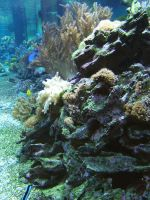 Coral Reef 2 by gwenna-stock