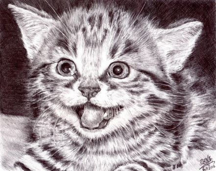 PEN drawing of a kitten by chaseroflight