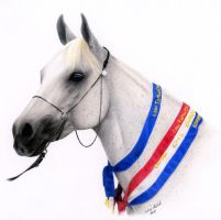 Nicolette - Arabian Mare by andreamichael