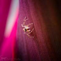 Eight-legged Wonder by RainaAstaldo