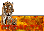 Tiger Signature by 13Firehunter13