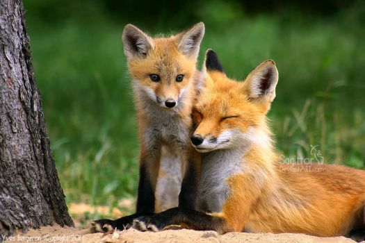 Mother And Cub III by Sagittor