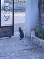 A Cat who GuArds my House by anmhm2090